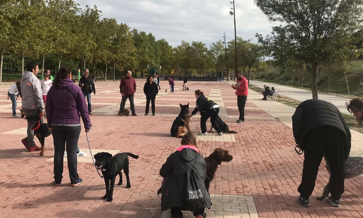 Aprende, educa y disfruta con tus perros, este fin de semana, gracias al programa Familia Canina de la Concejalía de Salud Pública