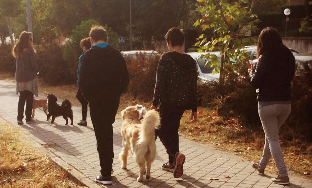 Aprende, educa y disfruta con tus perros, gracias al programa Familia Canina