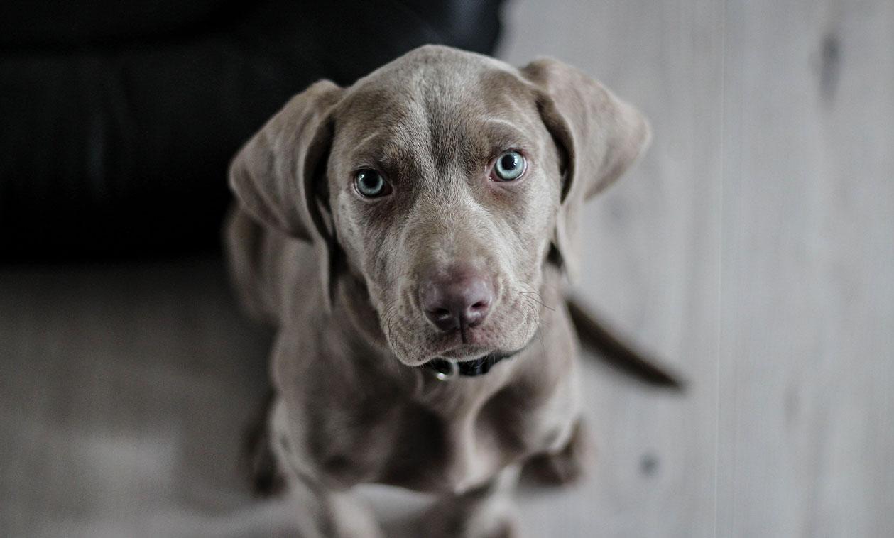 Programa «Familia Canina»