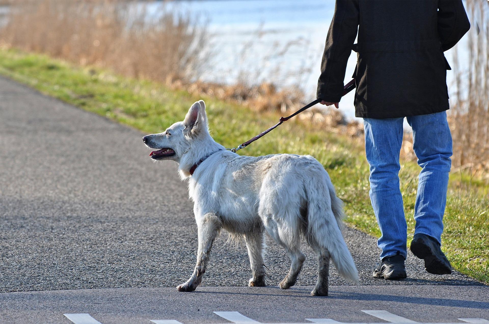 Sanciones de 525 euros a los propietarios de perros que no recojan sus excrementos