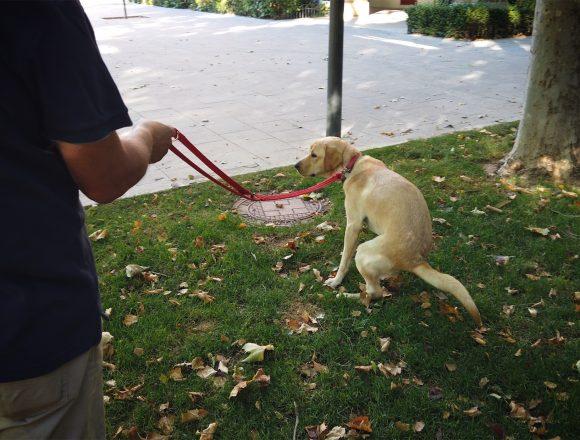 La Policía Local intensifica la vigilancia por no recoger los excrementos de mascotas