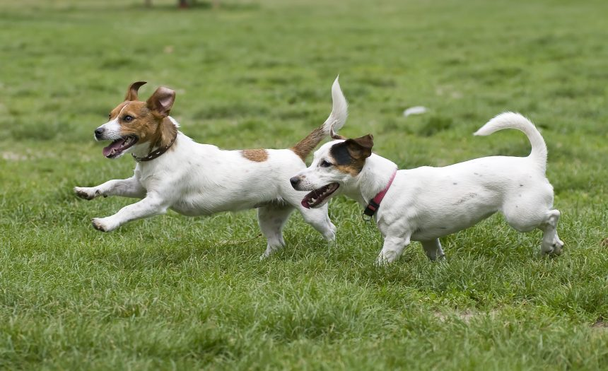 Nuevas zonas de esparcimiento canino donde los perros podrán permanecer sueltos
